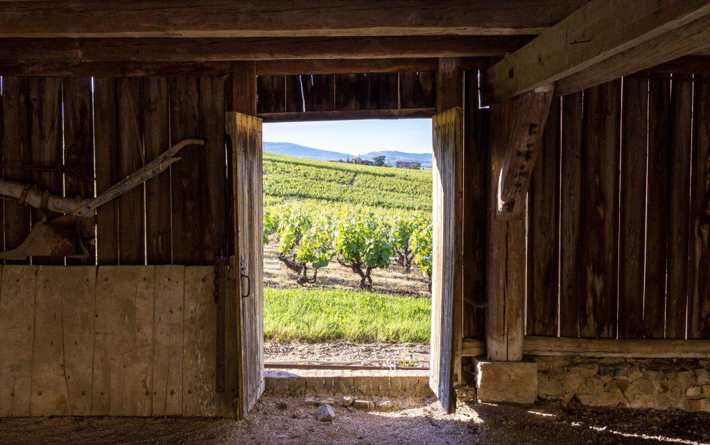 Chateau-Ravatys-Vignes-photoCOLASTUDIO-5
